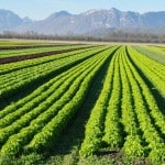 """As an Investor, you have to Understand """"Law of the Farm"""""""
